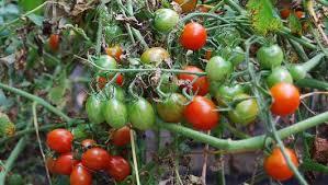 vegetable garden crop rotation mnn mother nature network