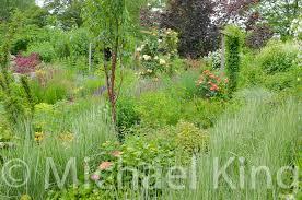 grass hedges perennial
