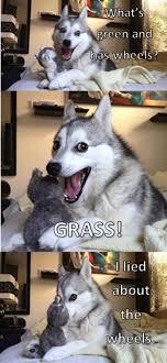 Dog Jokes Meme - dog jokes meme keywords and pictures