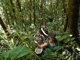 south australian native plants south australian museum major grant provides research