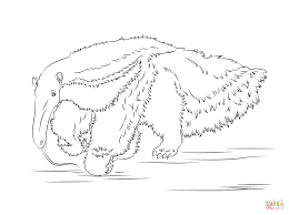 anteater coloring page ants coloring page free anteater coloring