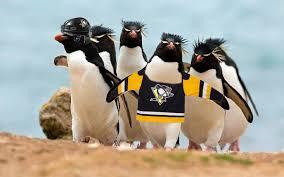 Penguin Birthday Meme - penguins looking for trouble r pics rebrn com