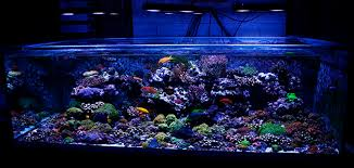 led lighting for zoanthids reefkeeping magazine may 2012 tank of the month i2as kass