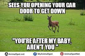 Grass Memes - deer memes