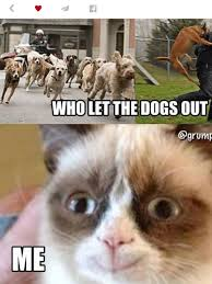 Best Grumpy Cat Memes - ha grumpy cat i can t believe that you smiled kaylin pinterest