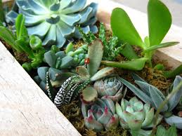 succulent tips and care instructions build sow grow