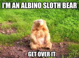 Angry Sloth Meme - 30 very funny bear pictures