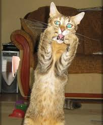 Scared Cat Meme - extremely scared cat meme generator