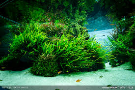 Aquascape Online Sumida Aquarium Reloaded Aquariums Fish Tanks And Aquarium Ideas