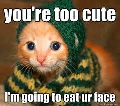 Cuteness Overload Meme - cuteness overload memes quickmeme