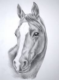 horse drawing pencil mustang horse pencil drawing art print signed
