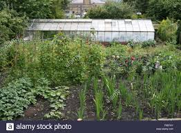 greenhouse for vegetable garden allotments and vegetable garden with greenhouse rows of runner