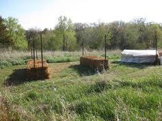 straw bale gardens deberosa u0027s homestead weblog straw bale