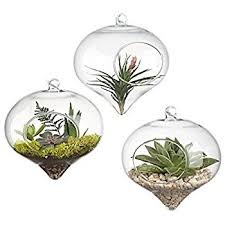 hanging air plant amazon com pack of 3 glass hanging planter hanging air plant