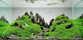 Aquascape Moss A Guide To Aquascaping The Planted Aquarium