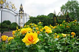stunning rose gardens around world travel rose garden destinations