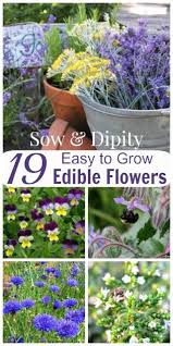 Edible Flowers Edible Flowers Garden Bed Design
