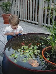 Is A Backyard Pond An Ecosystem Best 25 Patio Pond Ideas On Pinterest Backyard Patio Designs