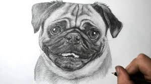 how to draw a dog pug youtube