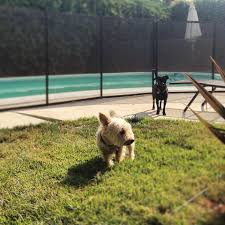 removable pet fence for the pool u0026 more protect a child