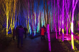 Anglesey Abbey Winter Garden - watch the beautiful winter lights at anglesey abbey cambridge
