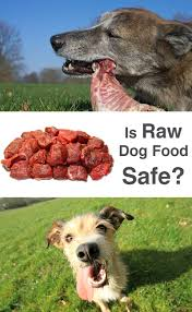 raw meat for dogs is it safe the happy puppy site