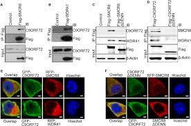 Anti Flag Affinity Gel A C9orf72 Smcr8 Containing Complex Regulates Ulk1 And Plays A Dual