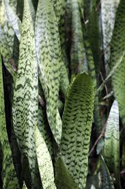 Best Plant For Mosquito Repellent Healthy And Helpful Plants For Your Home Toll Talks Toll Talks