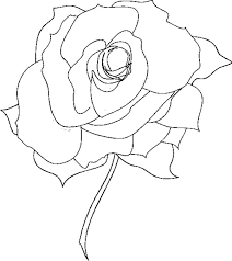 bloom roses coloring pages printable free download free coloring