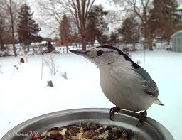 Michigan birds images 50 insane close up photos of michigan birds like you 39 ve never seen jpg