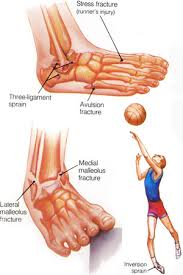 Foot Ligament Anatomy Ankle Jpg