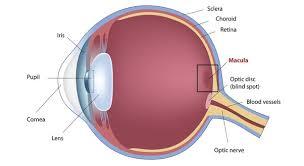 How Do People Get Blind Do Glasses Make Eyes Weaker Eyes