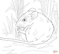 desert mouse coloring page free printable coloring pages