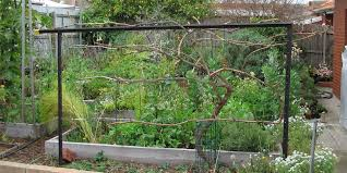 Privacy Trellis Ideas by Grape Vine Trellis Deep Green Permaculture