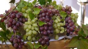 Planting Grapes In Backyard How To Grow Grape Vine In Your Backyard Dengarden