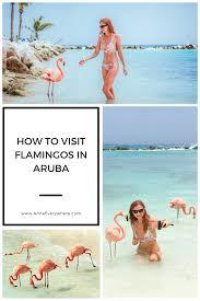 to visit flamingos in aruba renaissance private island