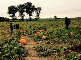 Pumpkin Patch St Louis Mo by Elevation Of St Clair County St Clair County Il Usa Maplogs