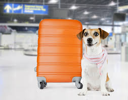 traveling with pets images Traveling with pets jpg jpg