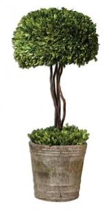 Topiary Plants Online - boxwood topiary trees foter