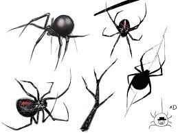 drawn arachnid sketched pencil and in color drawn arachnid sketched