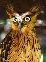 25 owl pictures ideas cute owl photo unique