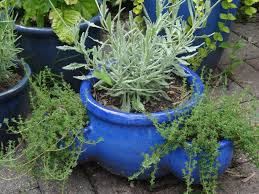 container garden ideas mixed herbs and succulents tended