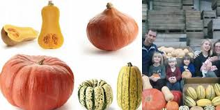 Small Pumpkins Especially Small Pumpkins Gaining Popularity U201d