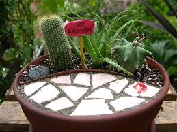 fancy design mini cactus garden contemporary create an indoor