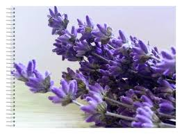 lavender tea it s time for tea grow your own lavender tea greenside