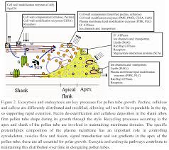 plants free full text endocytic pathways and recycling in
