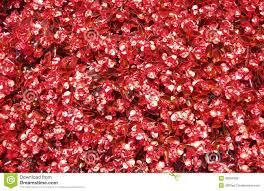 Bed Texture Red Flower Bed Texture Stock Photo Image 40264392