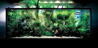 Okeanos Aquascaping Takashi Amano Aquarium Aquariums And Fish Pinterest