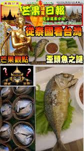 haricots verts cuisin駸 les 242 meilleures images du tableau 芒果日報 mango daily of