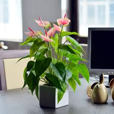 Small Plants For Office Desk by Mini Artificial Plants Office Desk Decorative Flower Dining Table